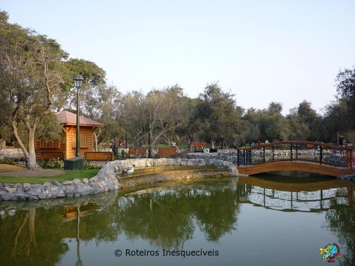 Bosque El Olivar - Lima - Peru