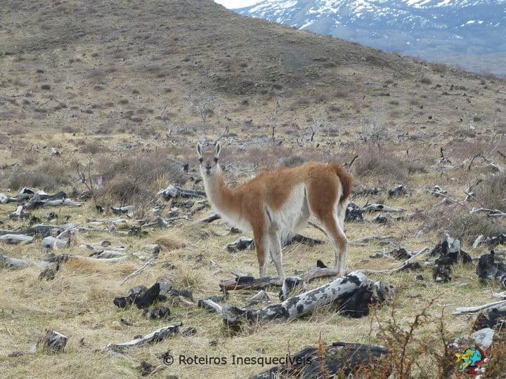 Torres del Paine - Patagonia Chilena