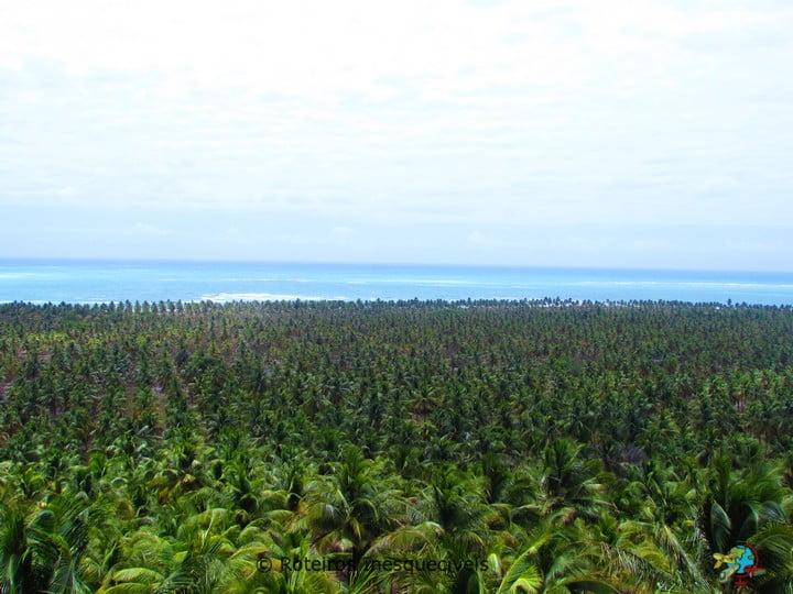 Praia do Gunga - Litoral Sul - Maceio - Alagoas