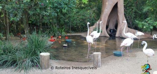 Parque das Aves - Foz do Iguaçu - Parana