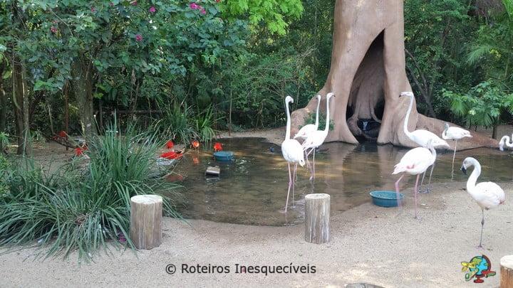 Parque das Aves - Foz do Iguacu - Parana